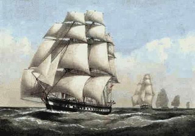 HMSNarcissusok
